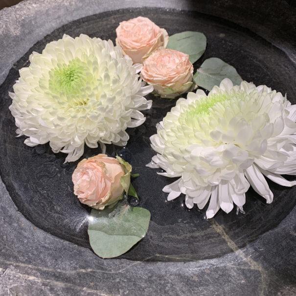 skønhed-blomster